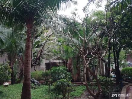 东信名苑,愉园学位,楼下健身房、游泳池和兵乓球活动室。近南香市场,精装修,