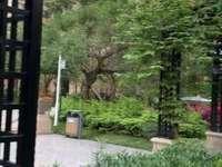 荔晶新城二期,两梯两户东头房,赠送十几平方,入证面积200平方,实用面积230平